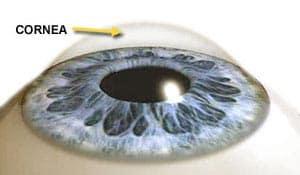 Image result for cornea