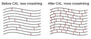 Cross Linking PIC